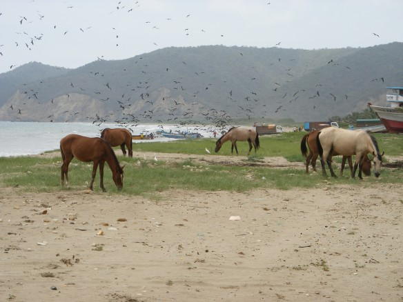 Horses on the beach in Lopez